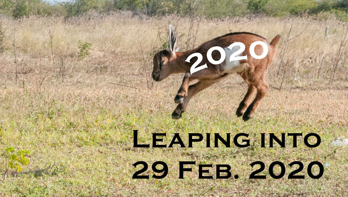 I couldn't get one of my own goats to jump on cue, so I had to get a stock photo. Credit: Wikipedia / Wilfredor