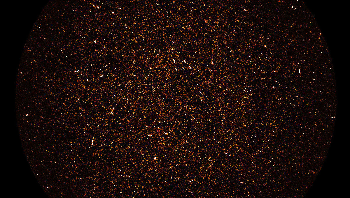 130 hours of MeerKAT observations in radio wavelengths yielded an image of tens of thousands of normal galaxies at distances of billion of light years. Credit: SARAO; NRAO/AUI/NSF