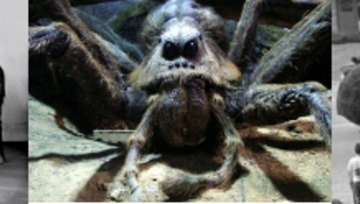 spidersheader2394944.jpg