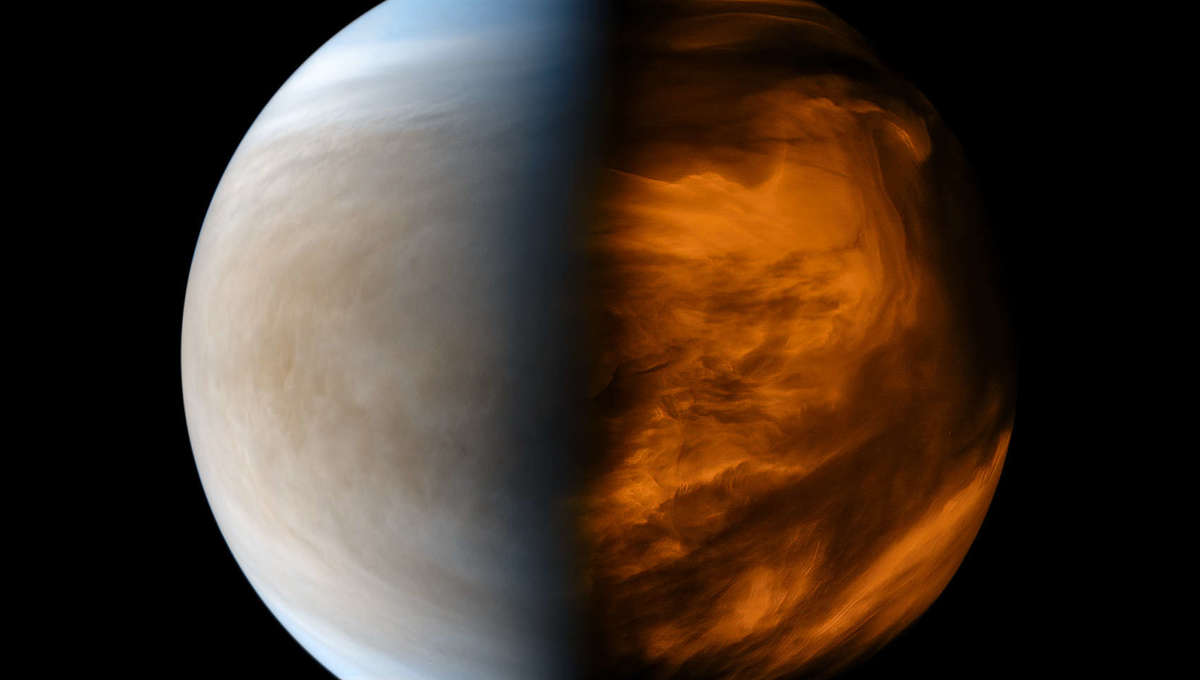 Processed image from the Japanese Akatsuki spacecraft showing Venus in ultraviolet (left) which emphasizes clouds, and infrared (right) which shows its thermal signature. Credit: JAXA/ISAS/DARTS/Kevin M. Gill