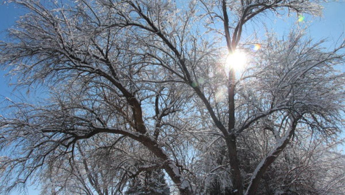 snowy_tree_sun_0.jpg