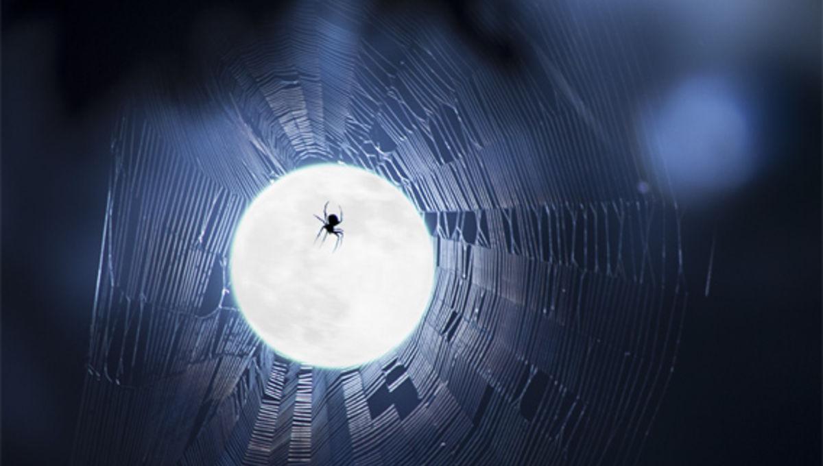 stevemarr_spiderwebmoon_568.jpg