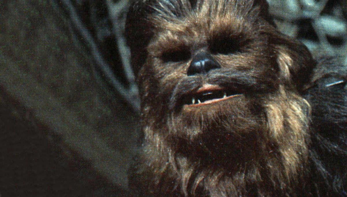 ChewbaccaPants.jpg
