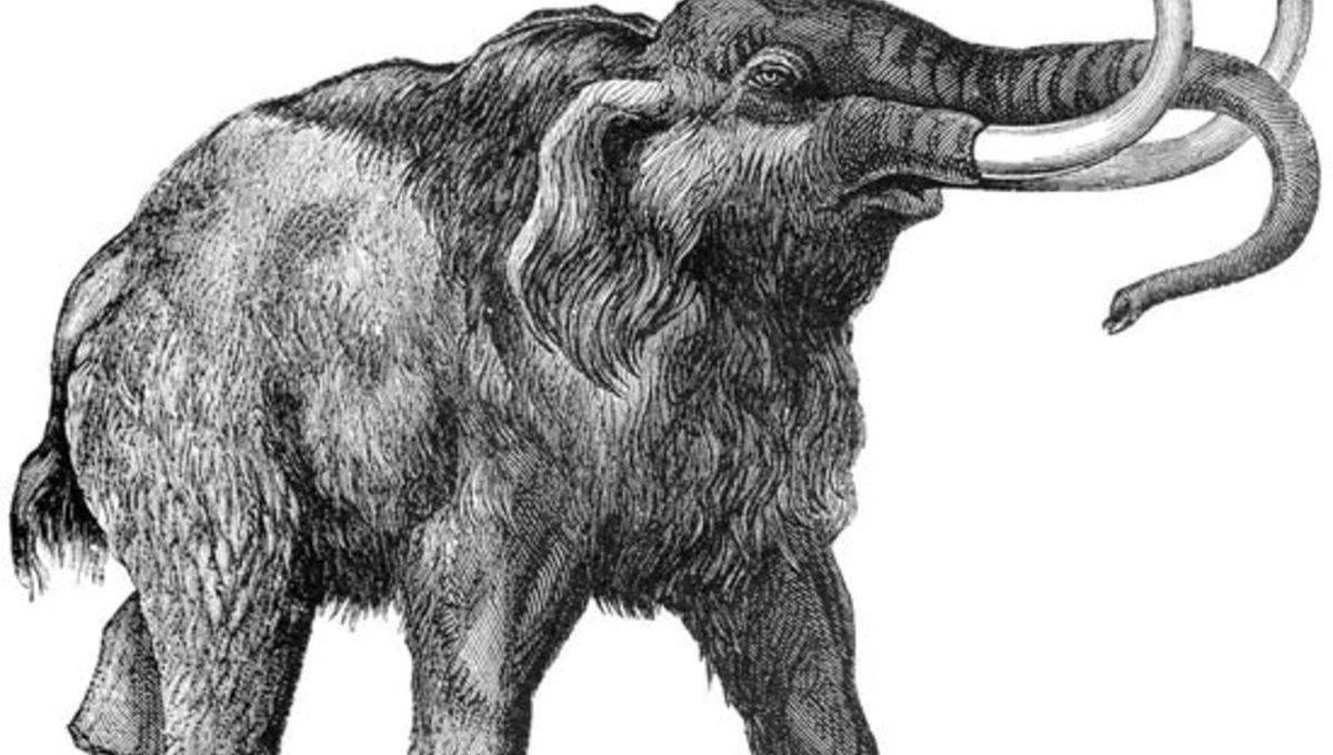 Mammoth031312.jpg