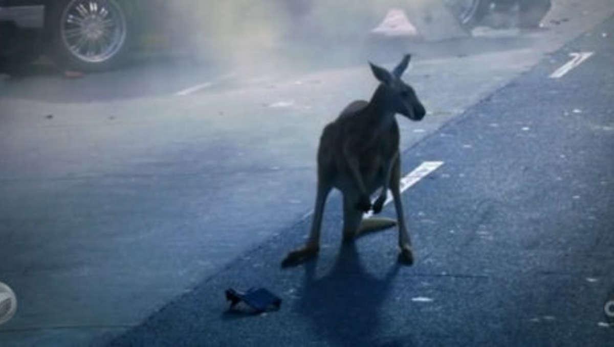 FlashForward_kangaroo.jpg