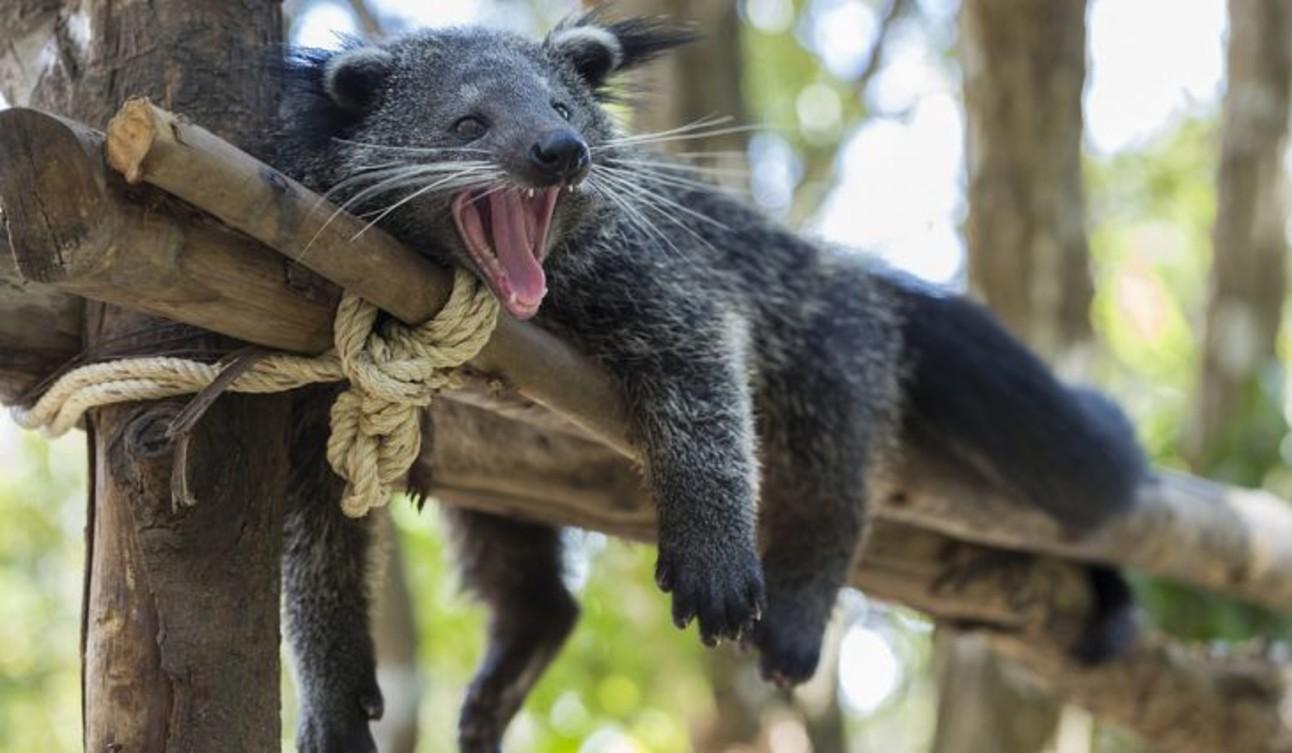 9_Bearcat.jpg