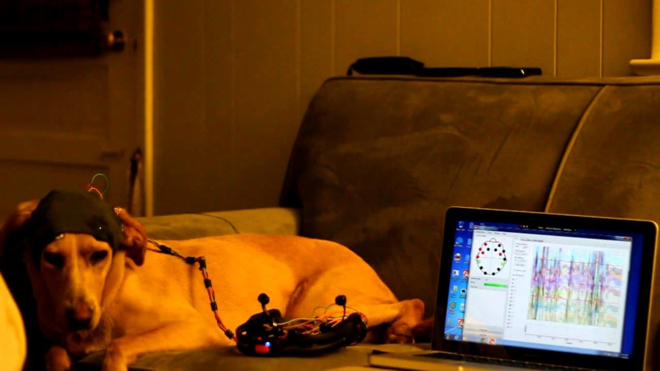 Header_Dog_headset.jpg