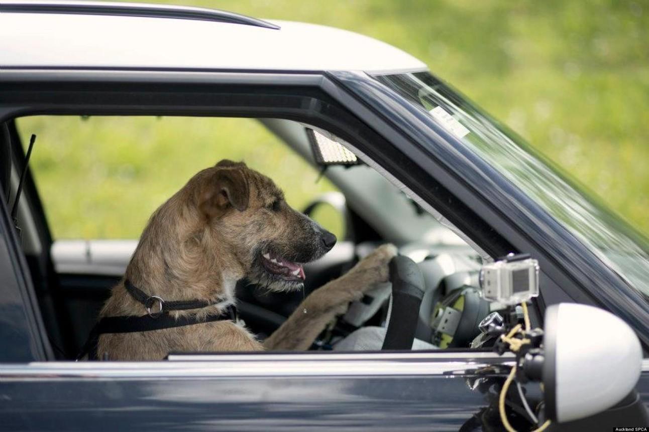 Header_driving_dog.jpg