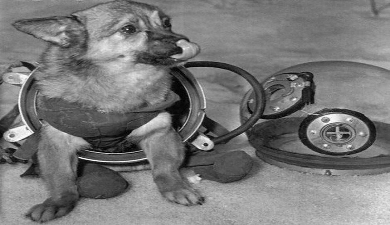 soviet_space_dogs_wide.jpg
