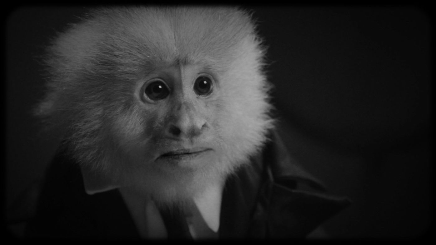David Lynch interrogates a capuchin monkey in his new short film available on Netflix