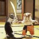 samurai_kitten_icon_0.jpg
