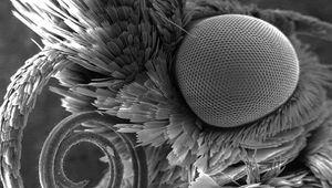 moth-closeup_fef71cb1fe5c01717dbf138ae3942b1a.focal-920x600.jpg