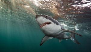 SharksUnderAttack_LR_002_MissionCritical.jpg