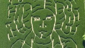 corn-maze-cover.jpg