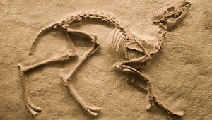 dinosaurs-amp-paleontology-in-the-classroom.jpg