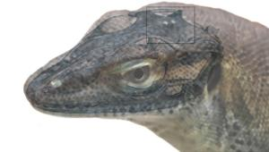 four-eyed prehistoric lizard