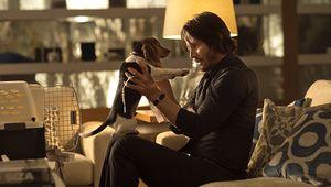 John Wick, puppy