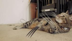 catwolverine.png
