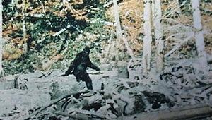 Bigfoot-Sounds_1.jpeg