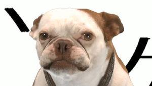 GoTdog.jpg