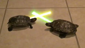 jedi-turtles.jpg