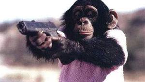 monkey-gun.jpg