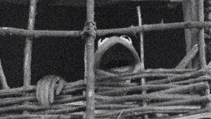 muppets-wicker-man.jpg