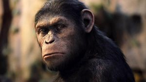 rise_planet_of_the_apes_2012.jpg