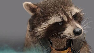 raccoon-2.jpg