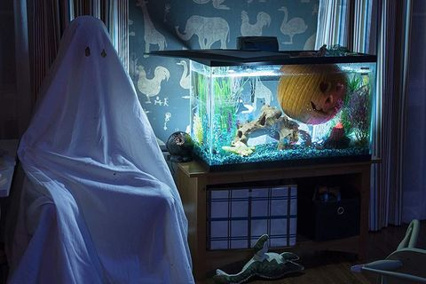 Halloween 2018 aquarium hero