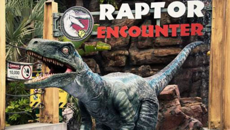 Blue from Jurassic World at Universal Studios' Raptor Encounter