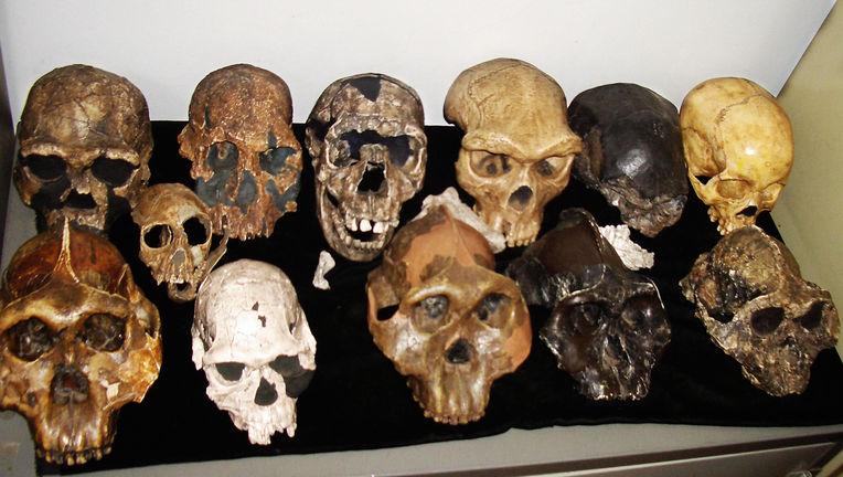 ancient human skulls