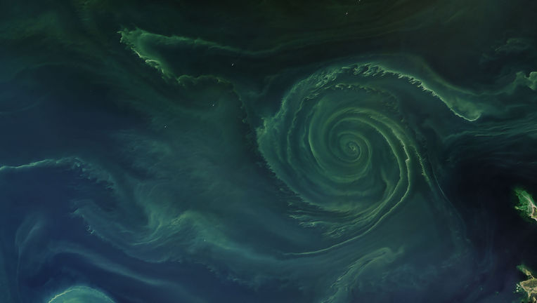 Landsat 8 image of a swirling phytoplankton bloom in the Bay of Finland. The tiny dots around it are ships.