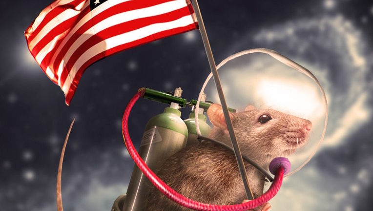 The-Space-Rat-106072.jpg