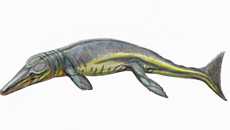 Tyrannoneustes-lythrodectikos.jpg