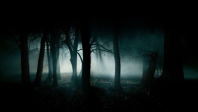 horror-forest.jpg