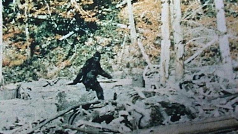 Bigfoot-Sounds_4.jpeg