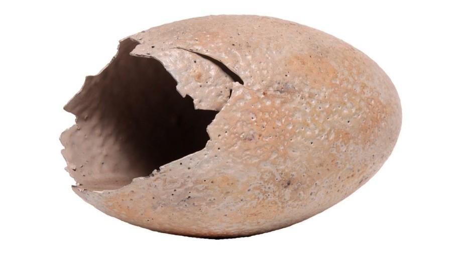 raptor egg from Jurassic Park