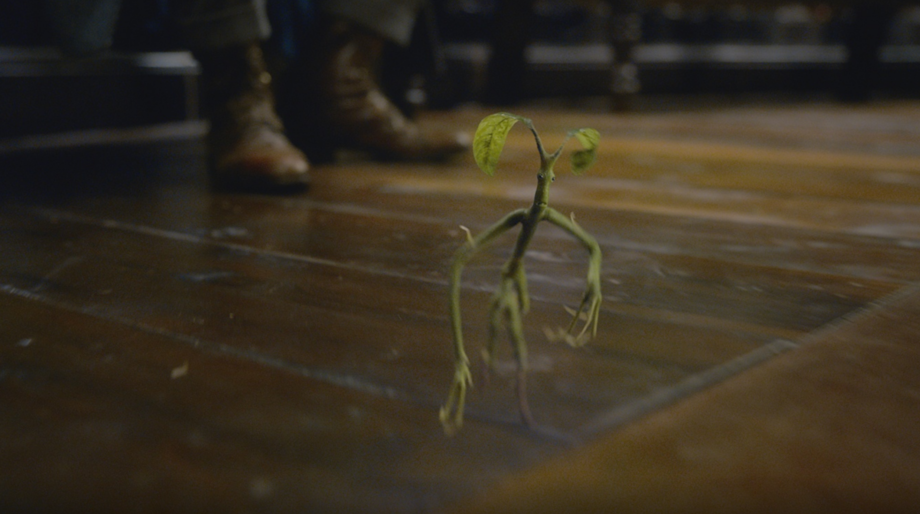 Fantastic Beasts: The Crimes of Grindelwald bowtruckle pickett