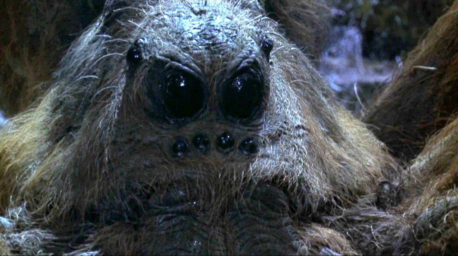 Aragog, Harry Potter and the Chamber of Secrets