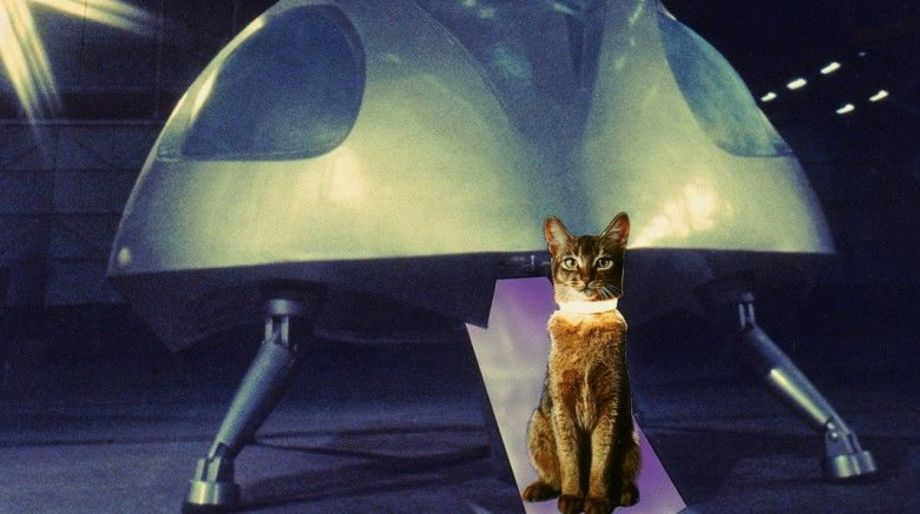 Jake the Cat (The Cat from Outer Space)