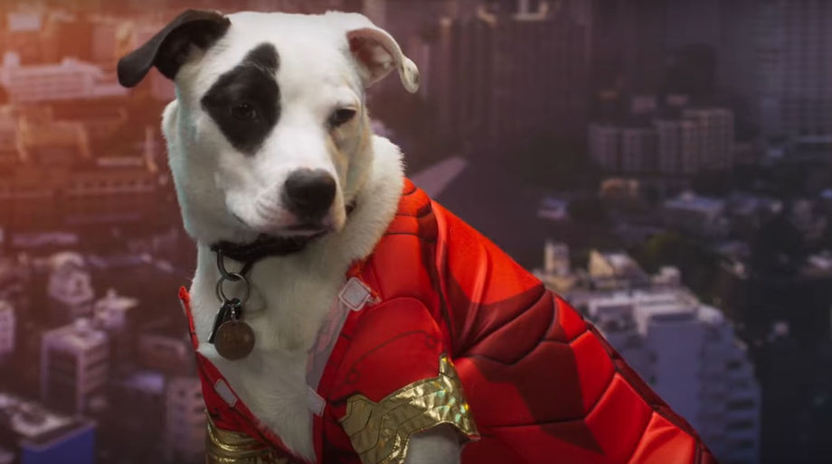 Avengers Endgame Puppies
