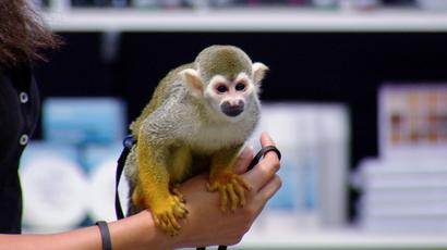FaceOff_blog_faces_802_squirrelmonkey_01.jpg