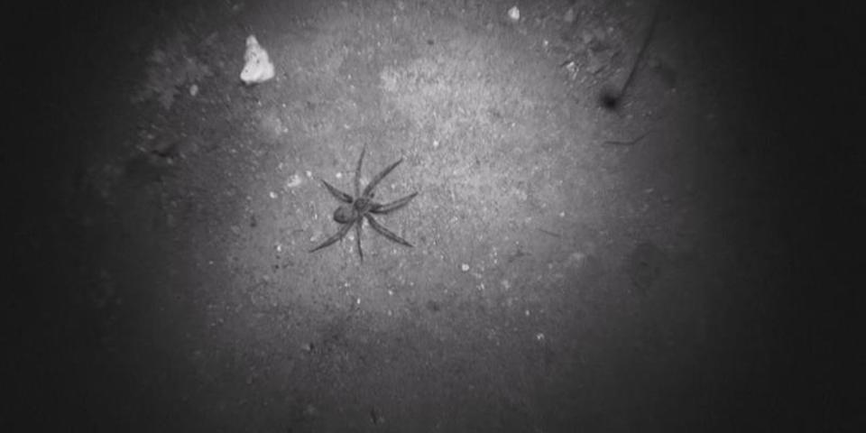 Bonus Scene: Creeping Crawlies