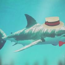 The Adventures of Gary the Shark