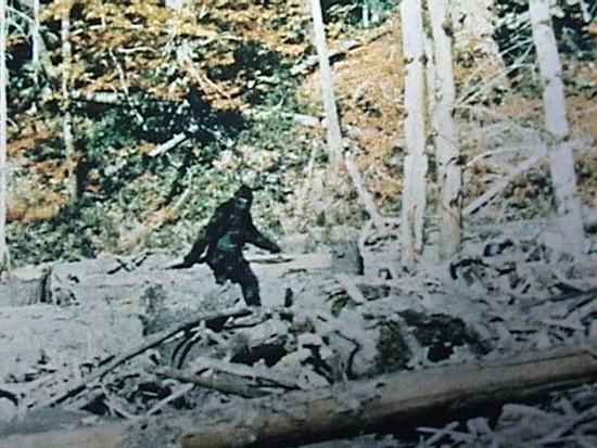 10 bigfoot sighting videos that could turn you into a believer