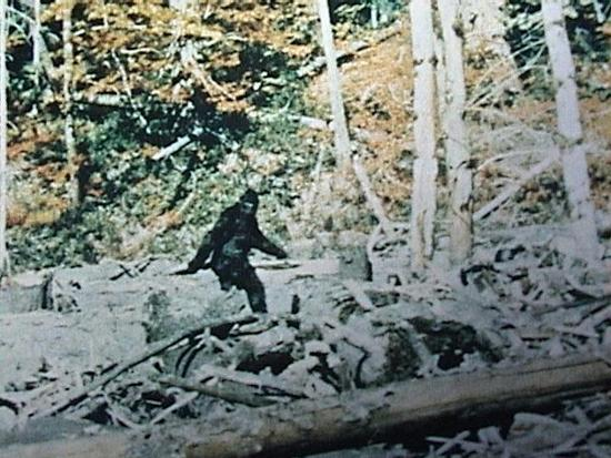 Bigfoot-Sounds.jpeg?itok=AM3lIofM