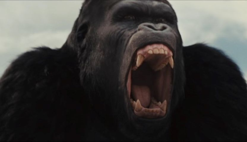 the culture of great apes It assumes intelligence, and holds that primates, particularly great apes,  sometimes the similarities between human and great ape culture becomes manifest,.