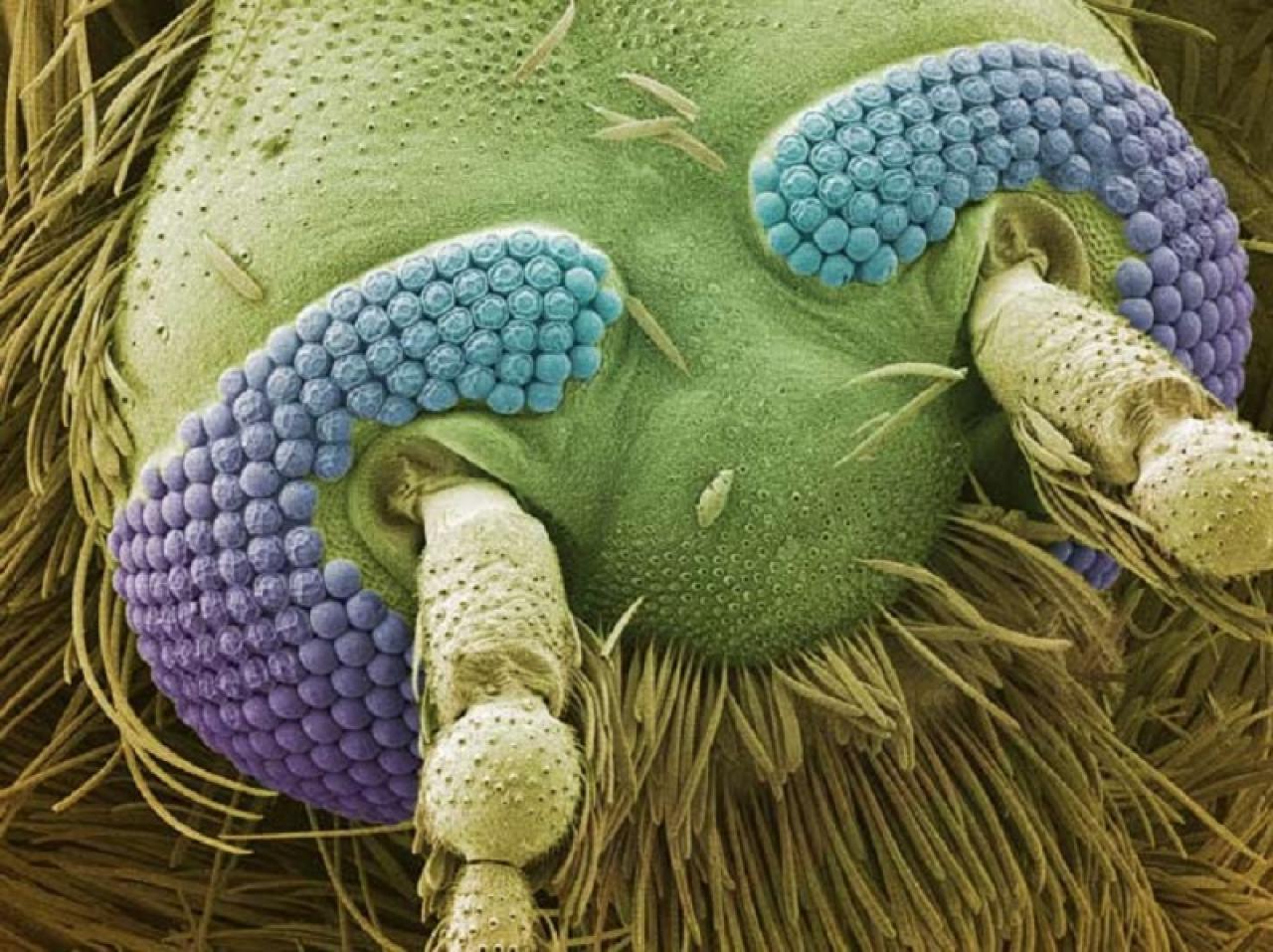 Фото комара на сосках 15 фотография