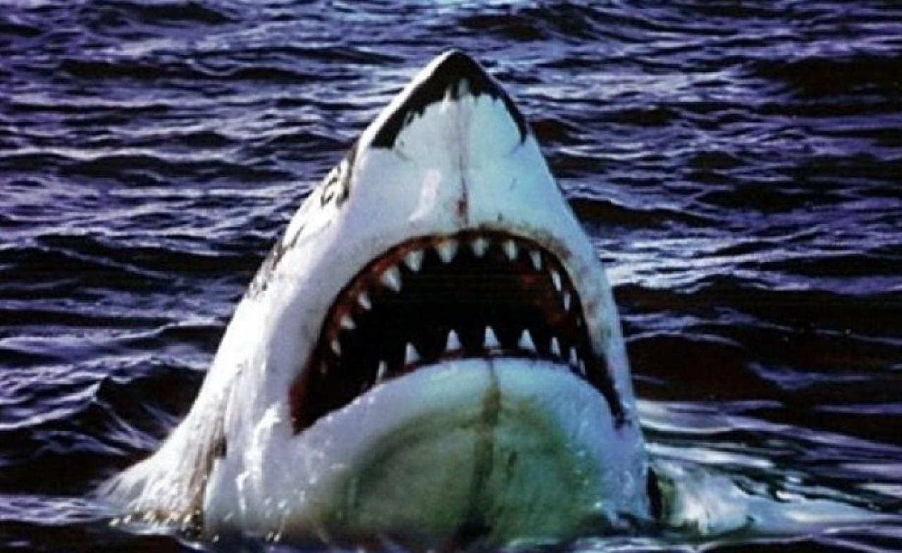 9 scary and sometimes silly shark props from movies and